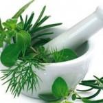 Plantes médicinales : 300 intoxications et 7 décès en 2013