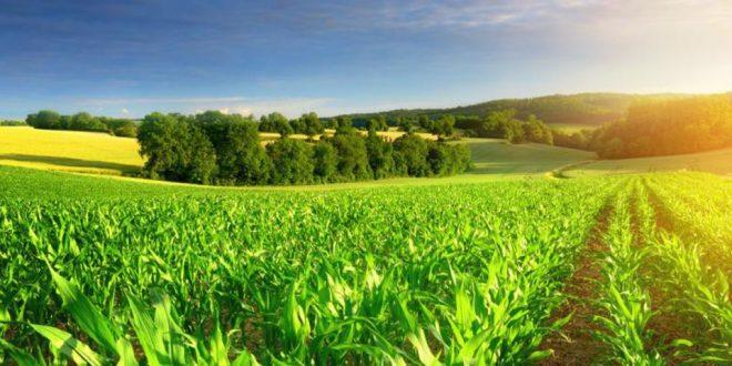 SIAM: Meknès tiendra ses 9e Assises de l'agriculture