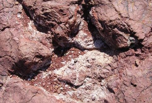 Le Royaume Chérifien est une terre riche de Dinosaures